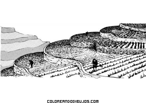Terrazas de cultivo para colorear