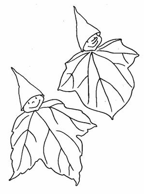 Dibujo de hojas duende