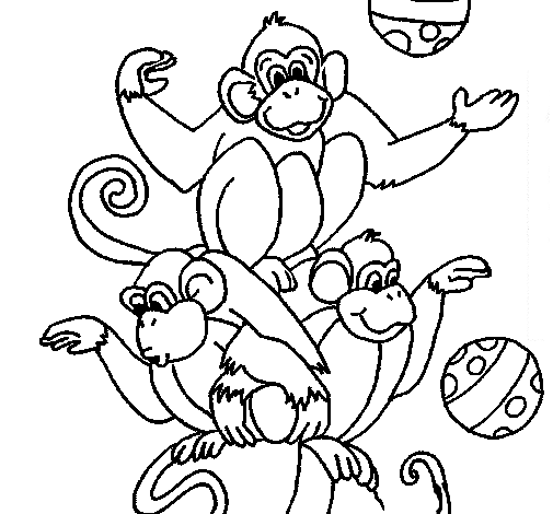 Monos malabaristas de circo