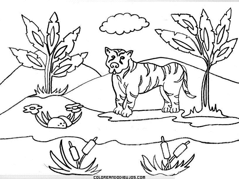 ecosistemas para colorear Colouring Pages