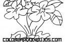 Ramo de flores para coloroear