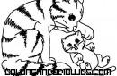 Dulces gatitos