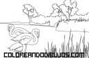 Pelícanos en la naturaleza