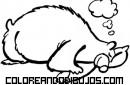 Oso durmiendo y roncando mientras hiberna