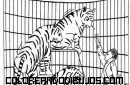 Tigres en el circo